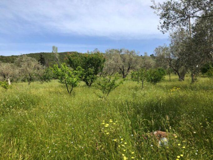 Beautiful plot for sale on Platanias