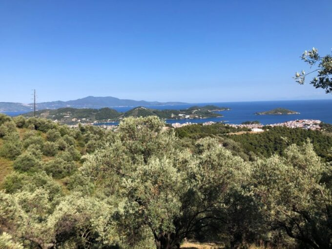 Olive grove for sale in Aghia Kali