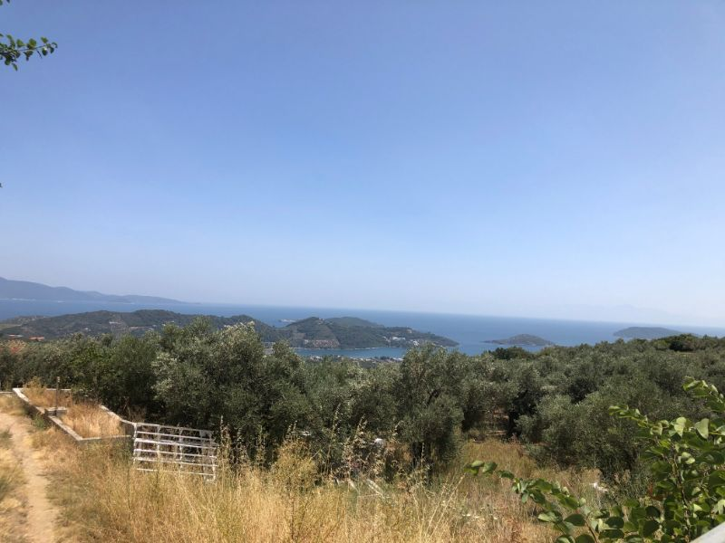 OLIVE GROVE FOR SALE IN AGHIOS DIMITRIOS